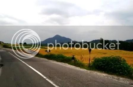 Jalan, Padi menguning, Gunung