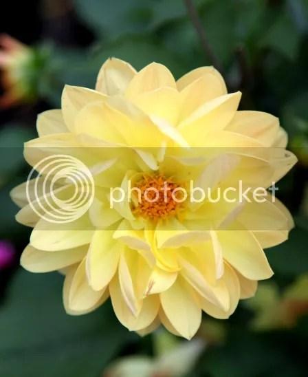 Bunga Kuning di Tepi Luzern See