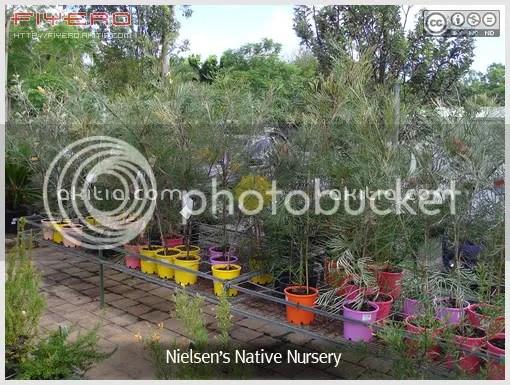 Nielsen's Native Nursery, ร้านขายต้นไม้ต่างประเทศ, ไม้จากออสเตรเลีย, ต้นไม้, ดอกไม้, aKitia.Com