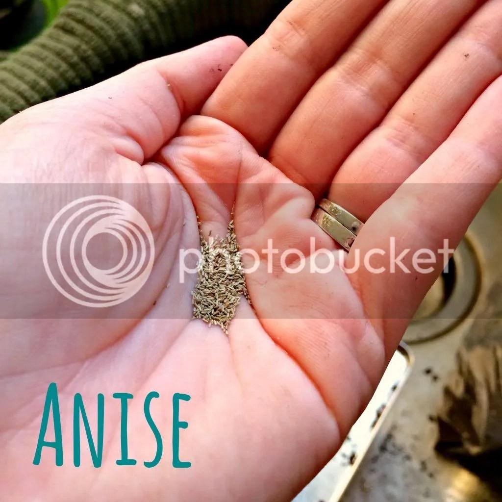 anise, tea