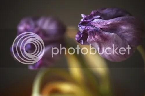 photo cce0f700-07ba-45d0-8817-4da350ff5914_zps690c55ae.jpg