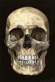 Skull Original