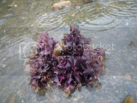 seaweed,brighton,travel