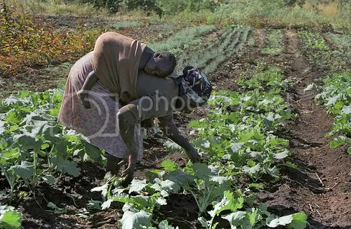 Zimbabwe woman farmer with child
