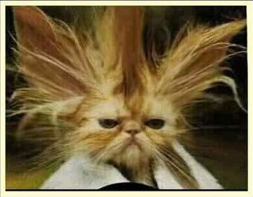 Resultado de imagen para imagenes de gatos arrabaleros