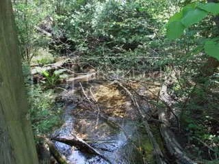 The creek in the bog
