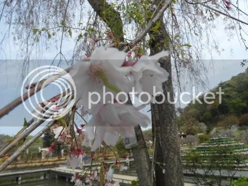 photo SAM_2926.jpg