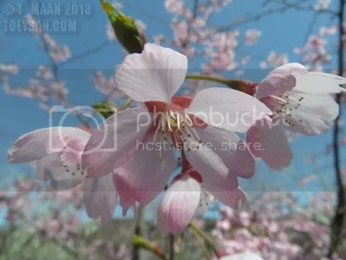 photo SAM_3123.jpg