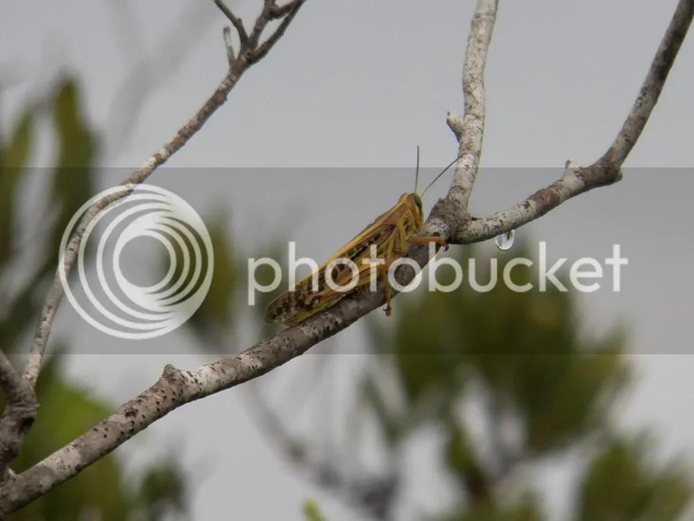 photo mini-lubber1.jpg