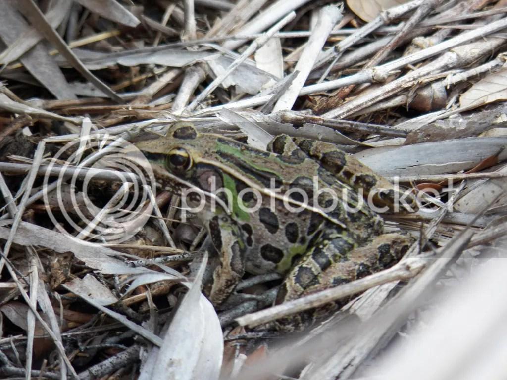 photo frog.jpg