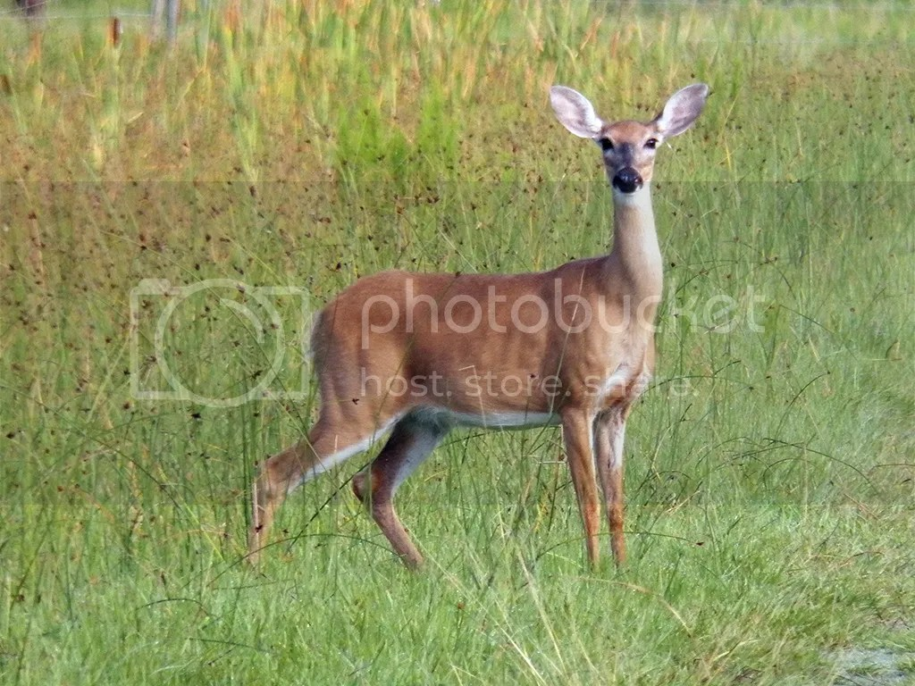 photo mom-deer.jpg