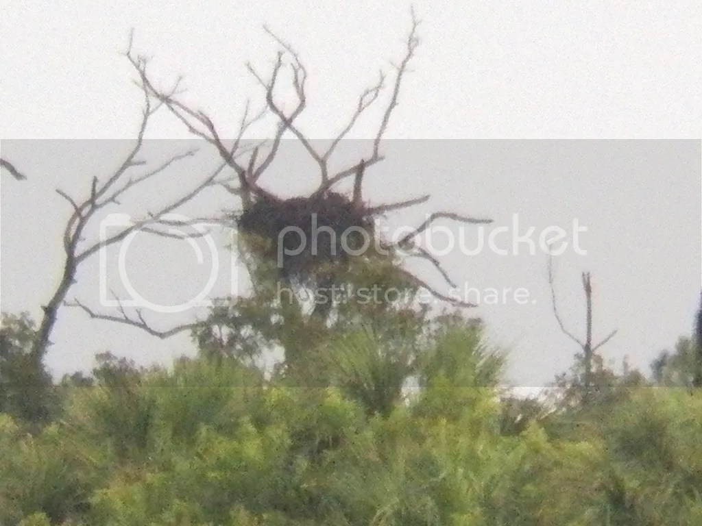 photo distant-eagle-nest.jpg