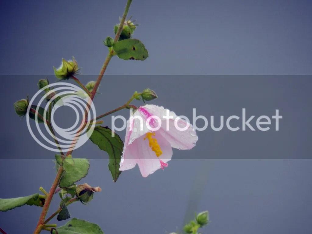 photo pink-flower.jpg