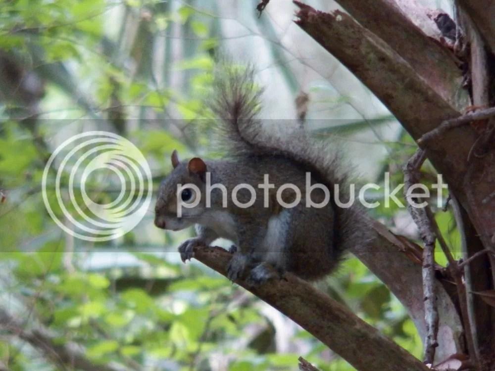 photo squirrel.jpg