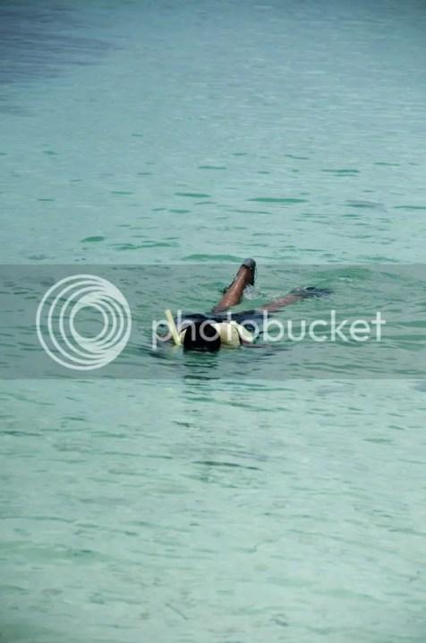 Snorkelling - Dry Tortugas