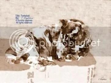 Tortoiseshell In Sepia