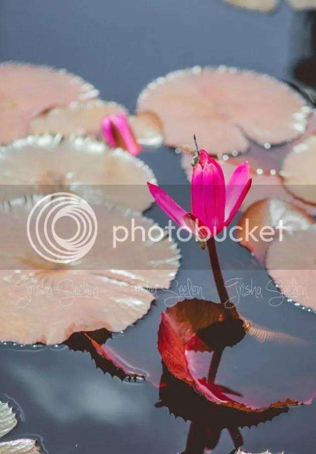 photo dragonfly_zpsc5db7d91.jpg