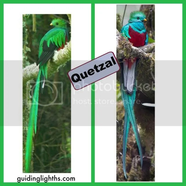 photo QuetzalCollage_zps46b82d94.jpg