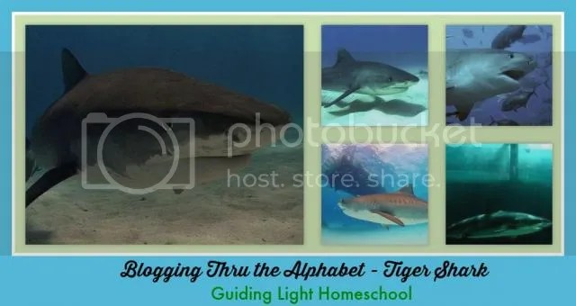 photo TigerSharkCollage_zps81e9172a.jpg