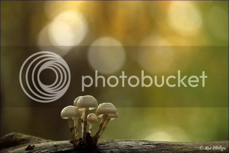 photo IMG_2102.jpg
