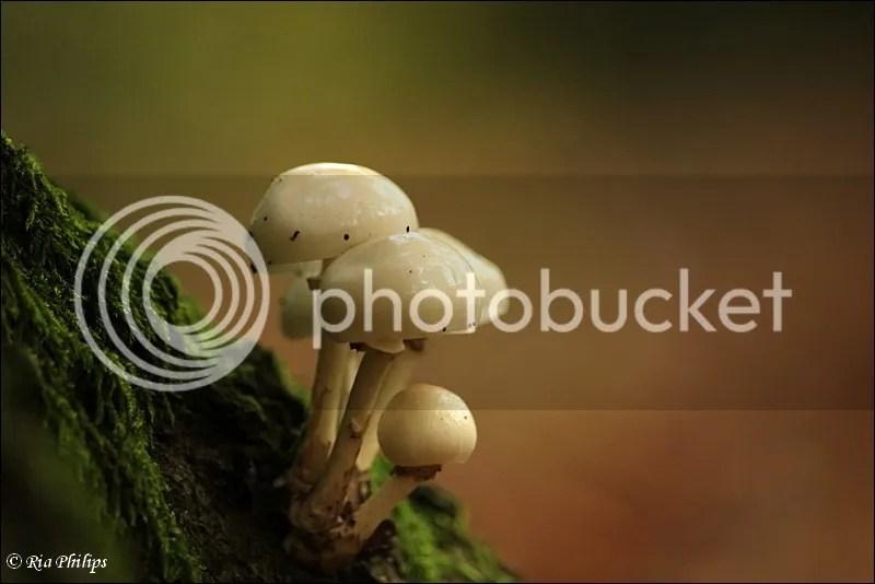photo IMG_2160.jpg