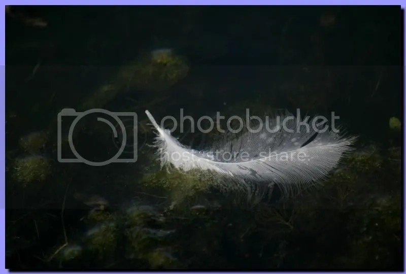 IMG_3926.jpg picture by bathmen