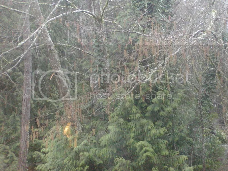 032617 Tree photo P1010204_3_zpsnyy92yf8.jpg