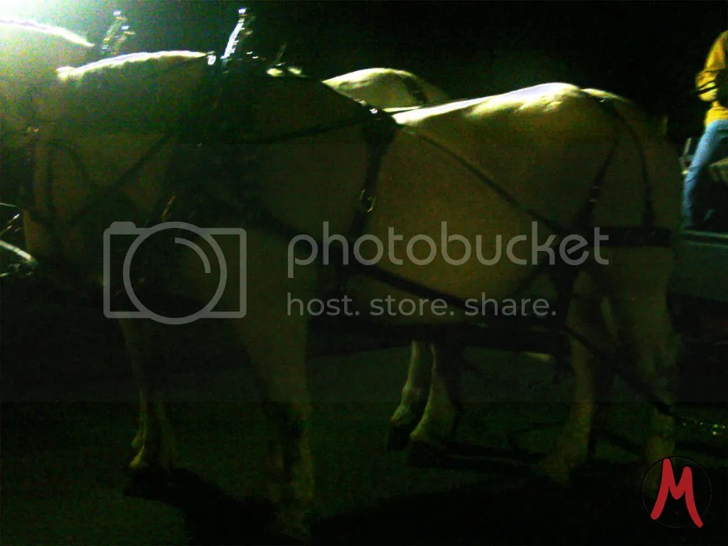photo horses_zpsk3doo9yk.jpg
