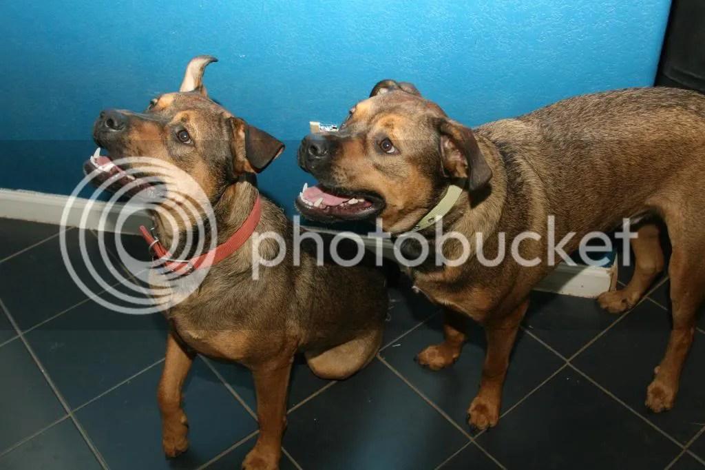 photo dogs5_zpse613130b.jpg