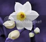 flower flowers,color,color splash,color splash effect,color splash flower