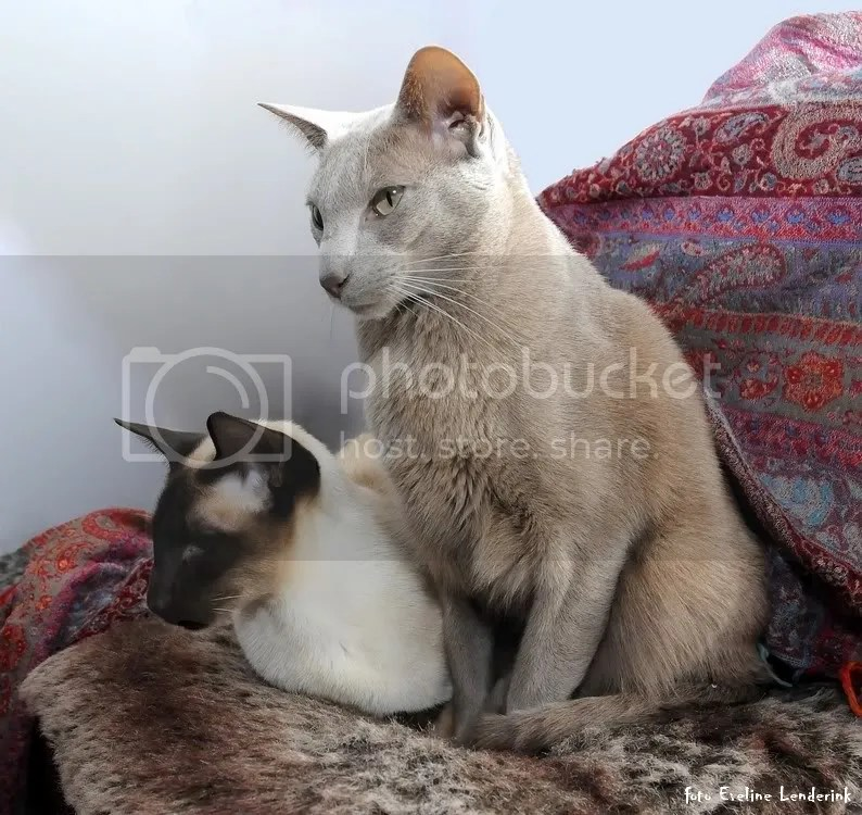 kattekopjesweblog.jpg