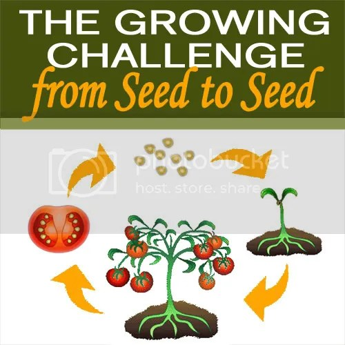 From Seed to Seed Challenge