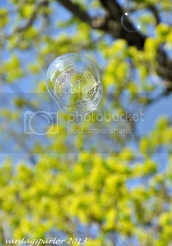 photo DSC_0093_zps63b90077.jpg