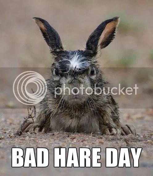 photo bunny-hare-day_zpsebb9f0cc.jpg