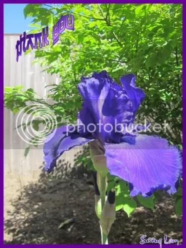 https://i2.wp.com/i86.photobucket.com/albums/k88/suonglam_2006/Cam%20On/1f6b73b1-7838-41a1-9e9e-981d48ba8760.jpg