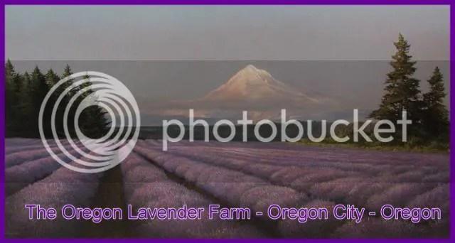 https://i2.wp.com/i86.photobucket.com/albums/k88/suonglam_2006/Toi%20yeu%20mau%20Tim/LavenderFarm.jpg