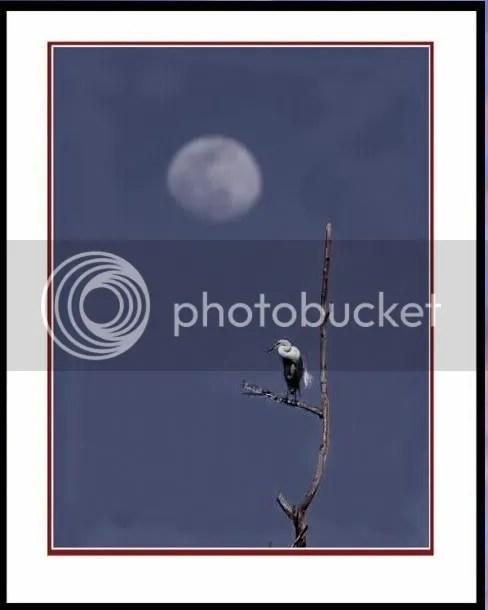 https://i2.wp.com/i86.photobucket.com/albums/k88/suonglam_2006/TrangTho/canhvaccodon.jpg