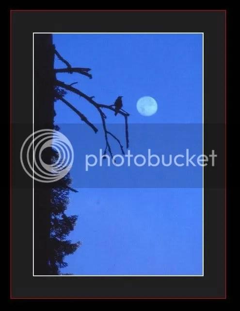 https://i2.wp.com/i86.photobucket.com/albums/k88/suonglam_2006/TrangTho/trangxanh.jpg