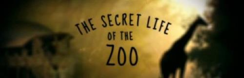 Image result for secret life of the zoo bbc