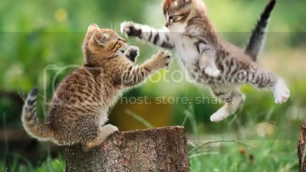 Kittens Pictures, Images and Photos