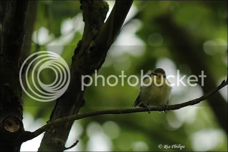 photo IMG_4252.jpg