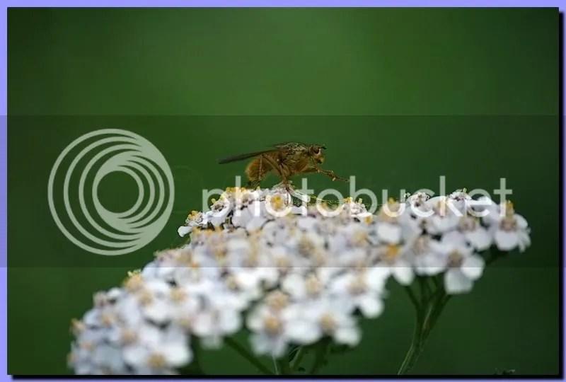 IMG_3193.jpg picture by Schipbeek
