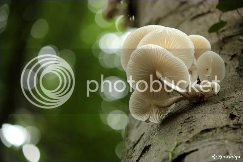 photo IMG_5911.jpg