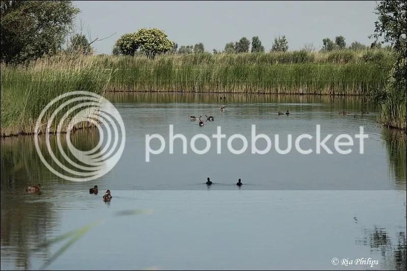 photo IMG_1798.jpg