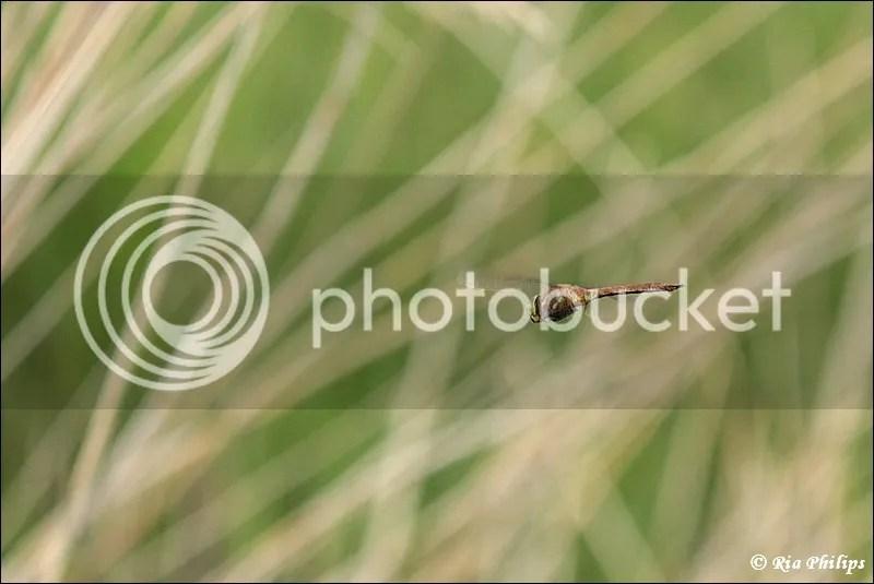 photo IMG_1999.jpg