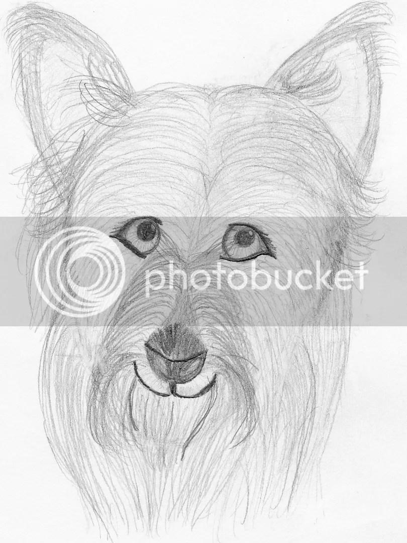 Character Sketcher ~ Because of Winn Dixie | Jenn Reads
