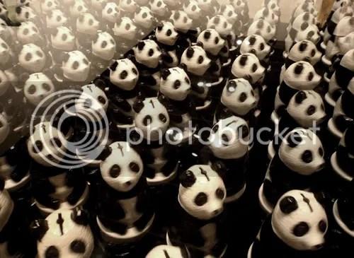 PKN DM Panda 1