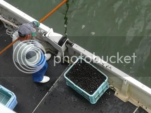 shijimi fishing 4