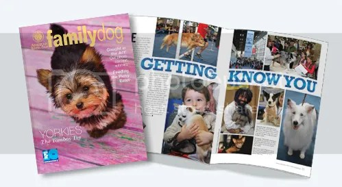 AKC Family Dog Magazine American Kennel Club Yorkie Beaded Jewelry Etsy July 2013