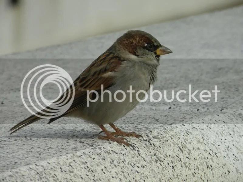 Finch Fantasy